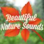 icon Beautiful Nature Sounds (Prachtige natuurgeluiden)
